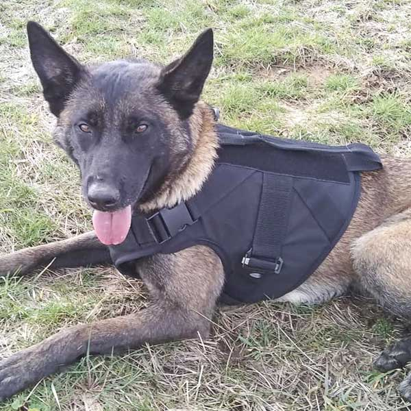 Canine Body Armour Stab Vest UK