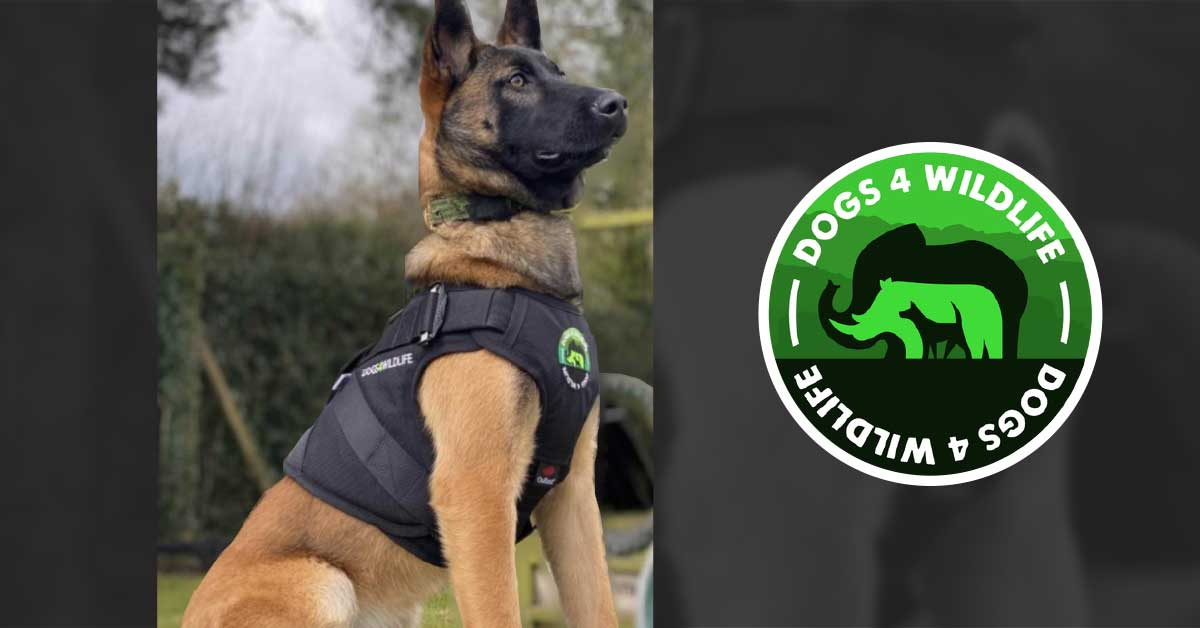 Shinga Dogs4Wildlife Canine Harness