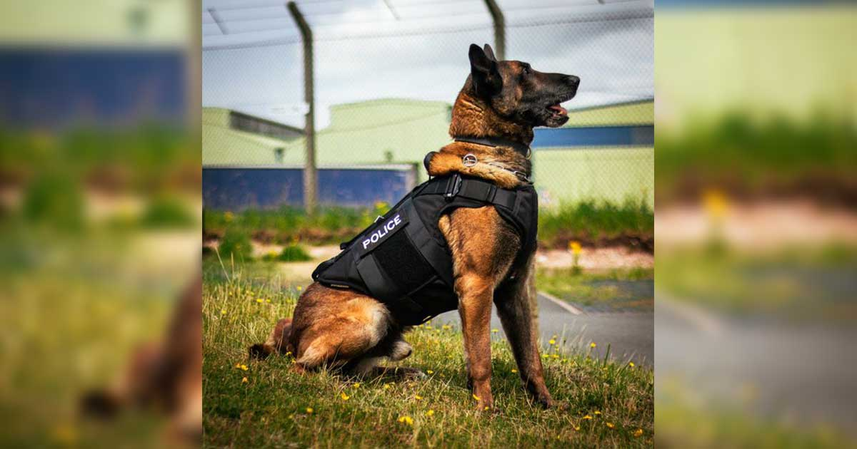Canine Body Armour Staffordshire Police